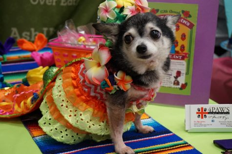 'Puppers' and 'doggos' march in Fiesta parade