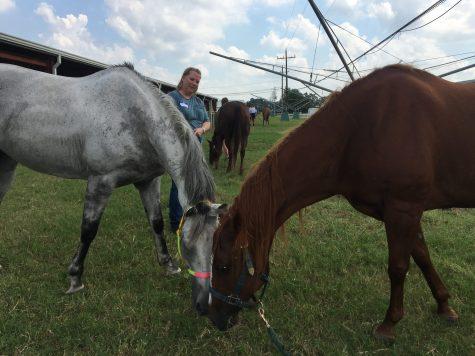 The horses of Harvey