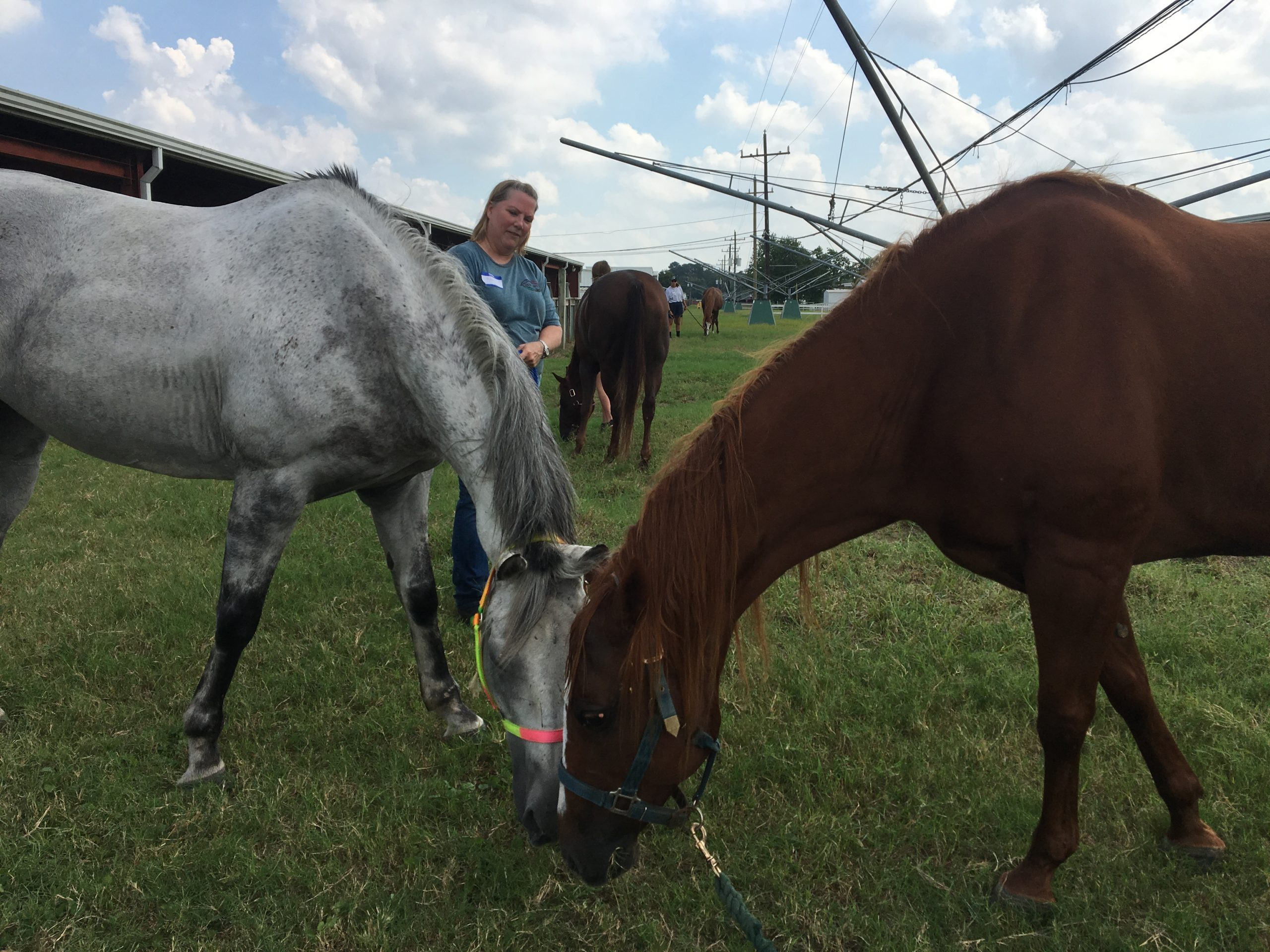 providing exercising and a free range is crucial for the horses recovery. Mackenzie Dyer/The Paisano
