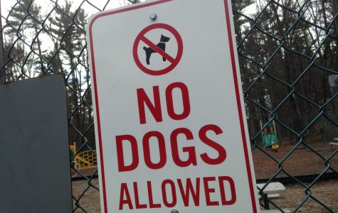 Counterpoint: Should pets be allowed on campus living?