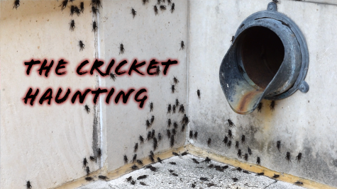 The Cricket Haunting of UTSA